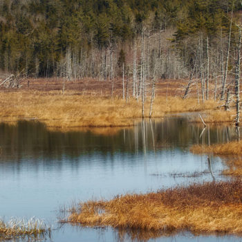 Schoodic Bog. Photo credit Jeff DiBella.