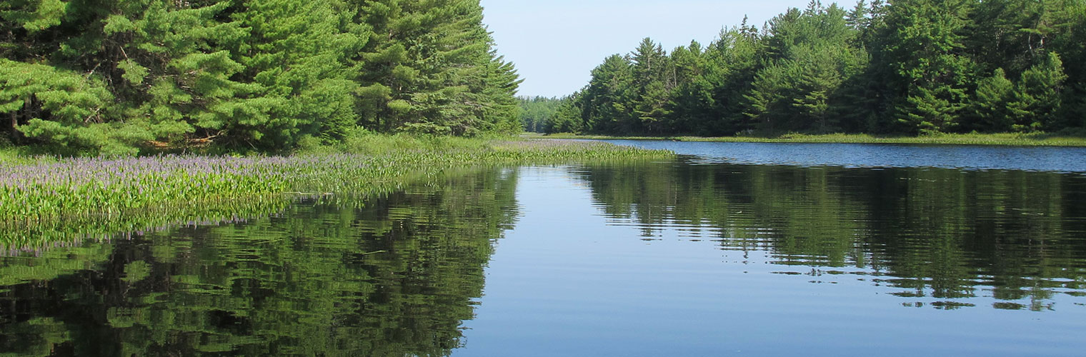 Upper West Bay Pond - Frenchman Bay Conservancy