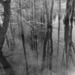 Schoodic Bog Trail. Photo credit Jeff DiBella.