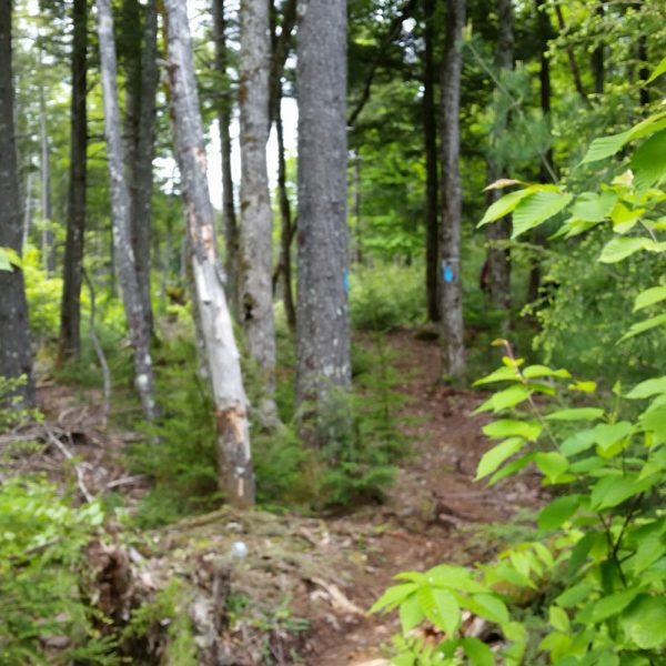 Branch Lake. Photo credit Eileen Hall.