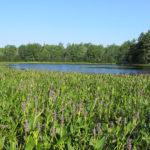 Upper West Bay Pond. Photo credit Bob DeForrest.