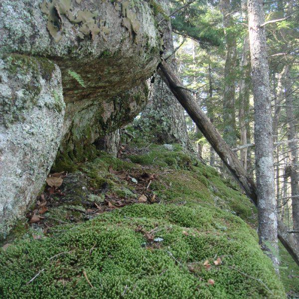Moss on ledge. Photo credit by Tom Sidar.