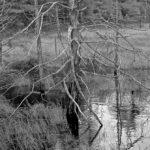 Schoodic Bog, Franklin. Photo credit Jeff DiBella.
