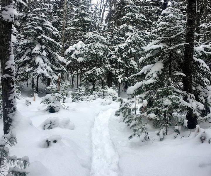Aislinn Sarnacki Features Simon Trail in 1-minute Hike
