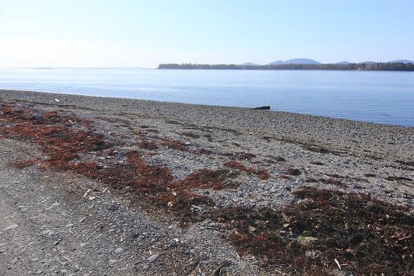 Help Keep Marlboro Beach Open