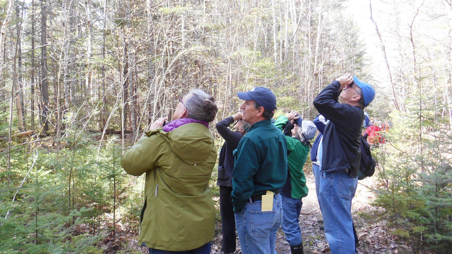 FBC- Birdwatching (Old Pond Railway Trail, Hancock)