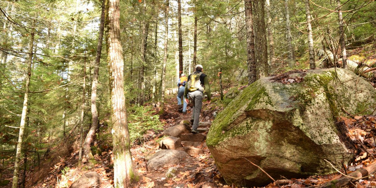 Schoodic Connector Trail