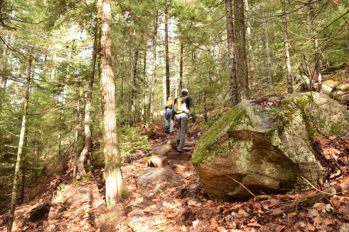 Schoodic-Connector-Trail